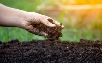 The Value of Soil Health