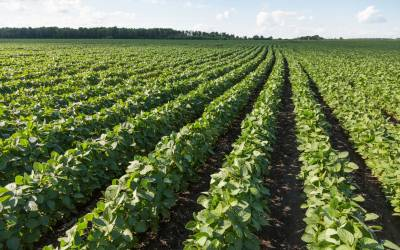 Unearthing soil's benefits from cover crops